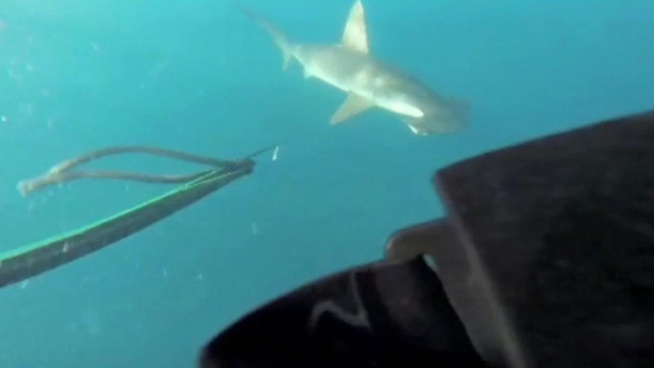 Men swim with hammerhead shark off Los Angeles coast