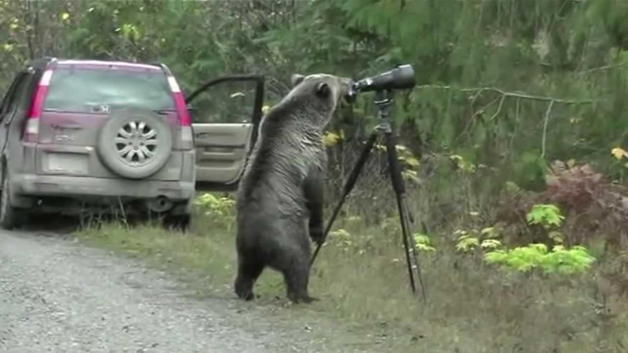 Bear caught on camera in British Columbia