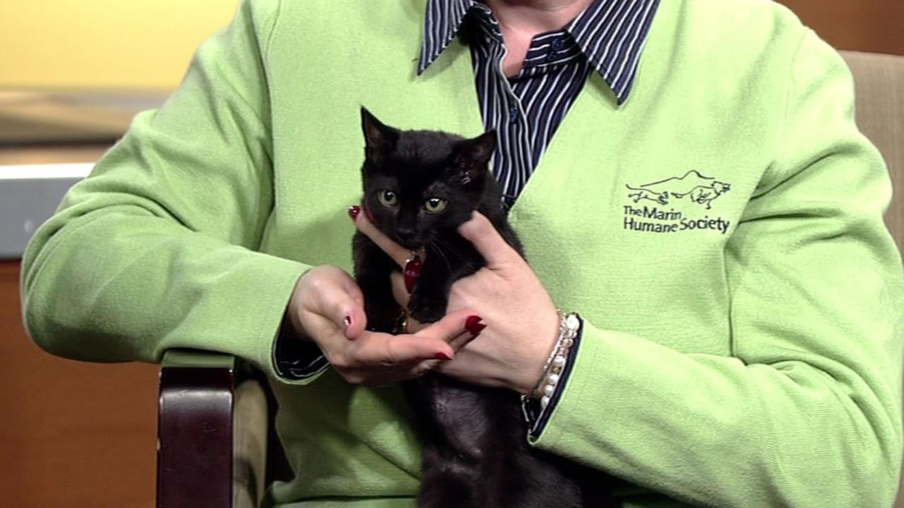 This weeks Perfect Pet is a kitten named Panther.