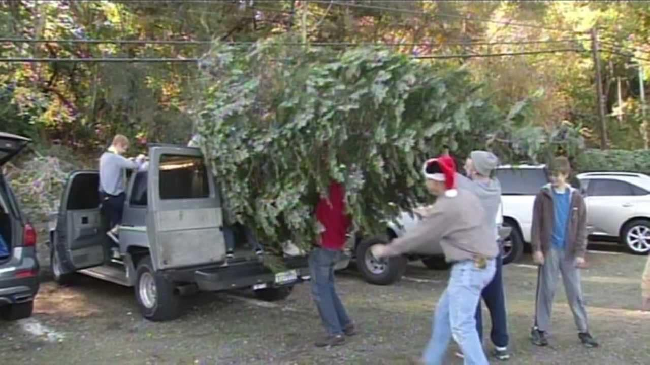 Many people are spending Black Friday shopping for their Christmas trees.