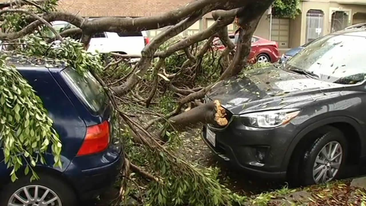 Tree falls on top of car in SFs Presidio neighborhood