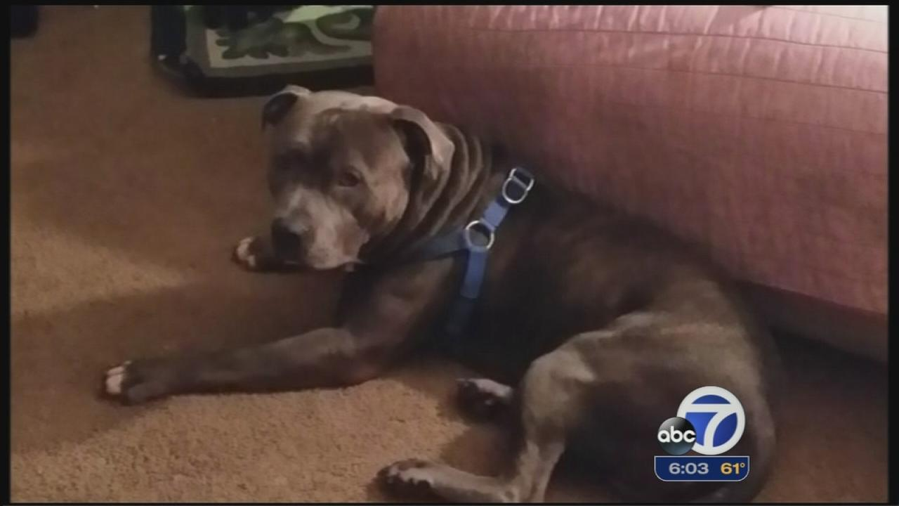 Dog to be euthanized after mauling girl