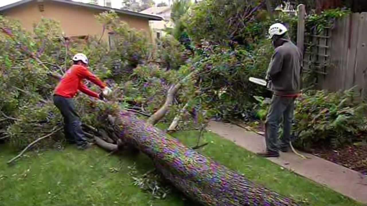 A 50-foot tree came crashing down in the backyard of a home on Boston Avenue in Oakland Saturday night.