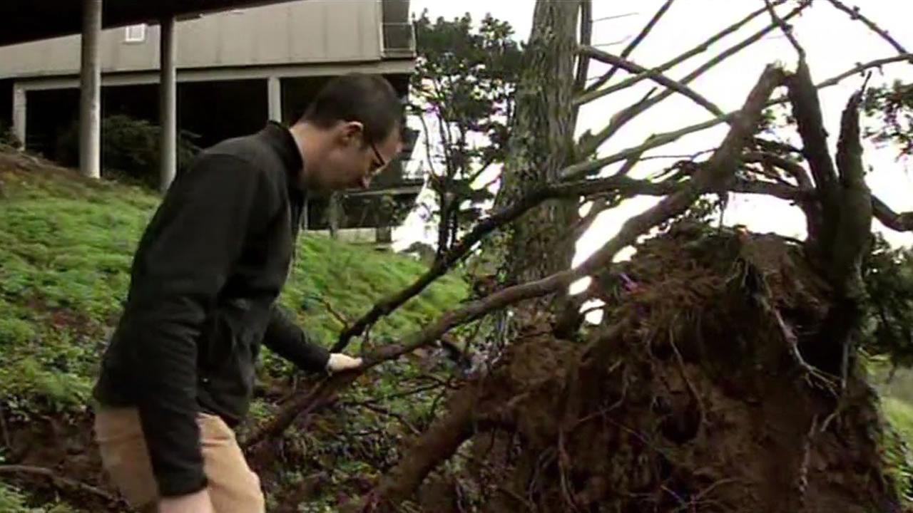 A series of storm systems are uprooting at-risk trees.