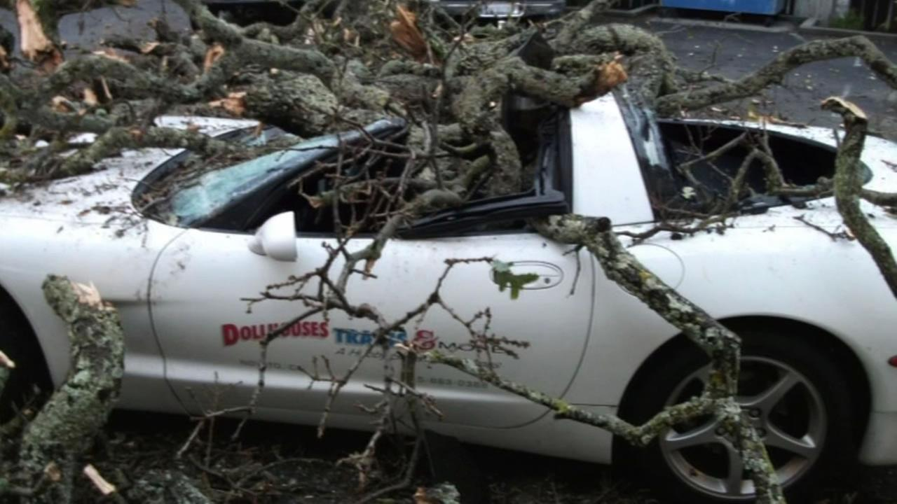 Several days of rain topples an oak tree right onto a Corvette in Novato.