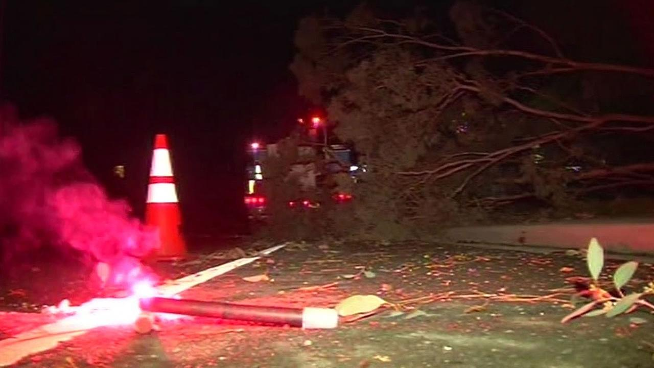 tree fell in Marin County
