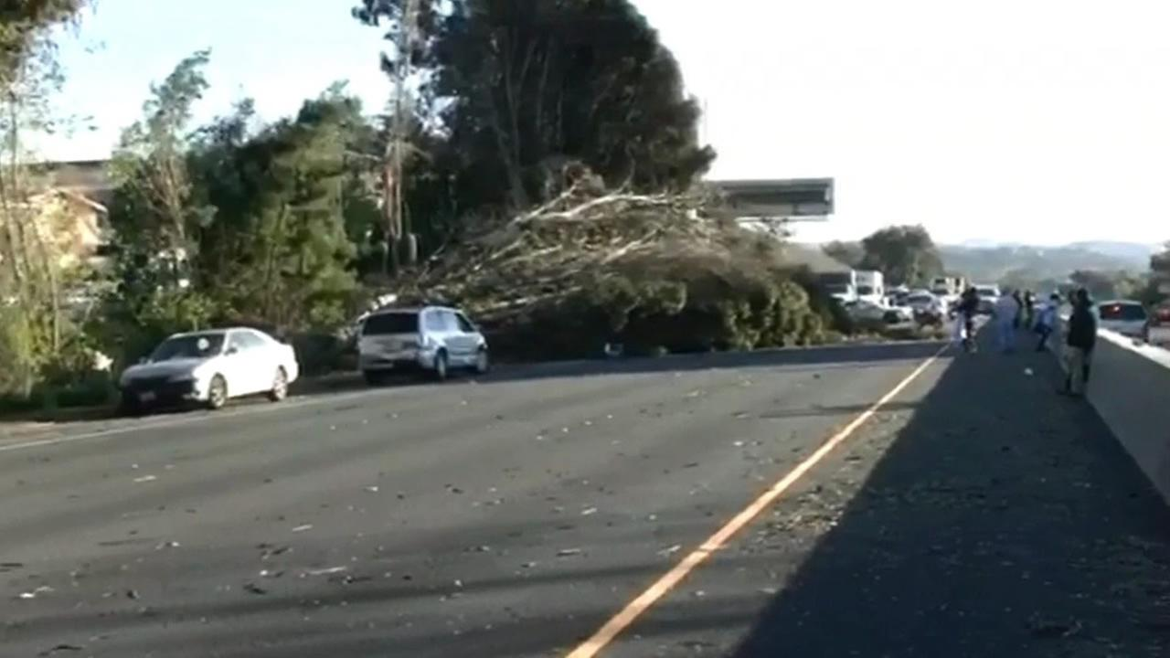 Large tree falls on Interstate 80 in Vallejo