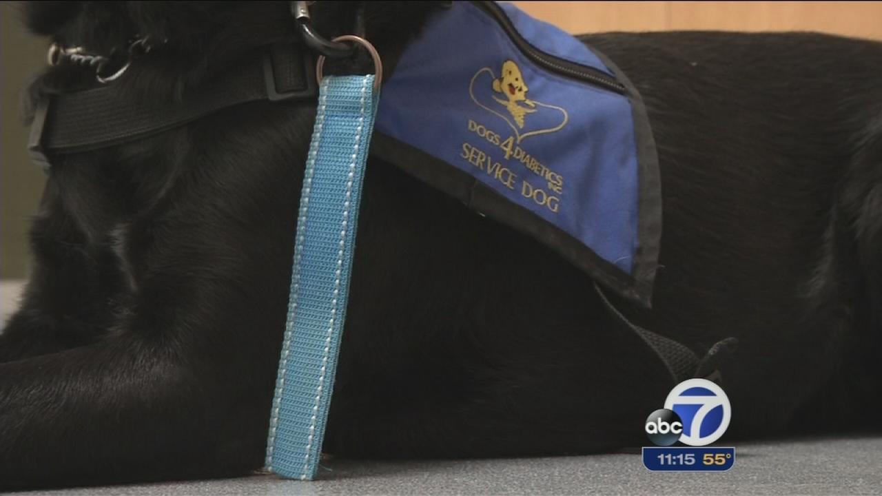 Non-profit trains dogs to help diabetes patients