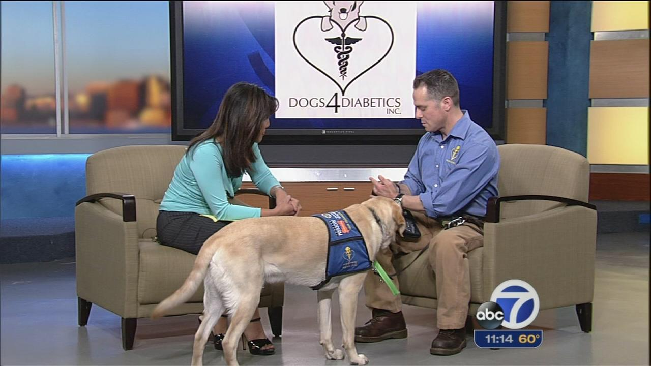 Dogs 4 Diabetics service dog stops in ABC7