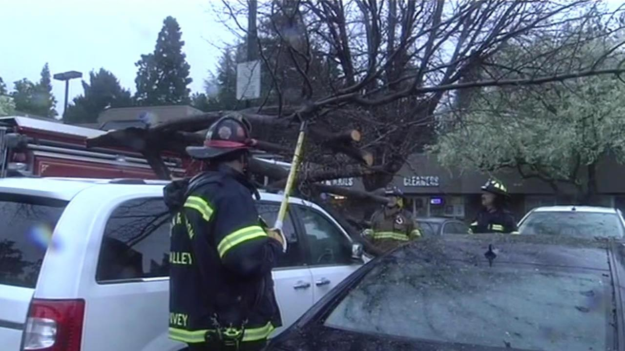 Tree falls on top of car