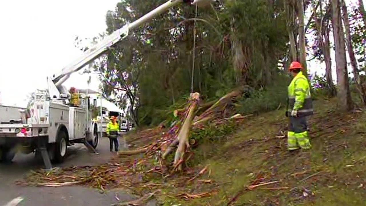 Crews remove fallen tree from road in South Bay