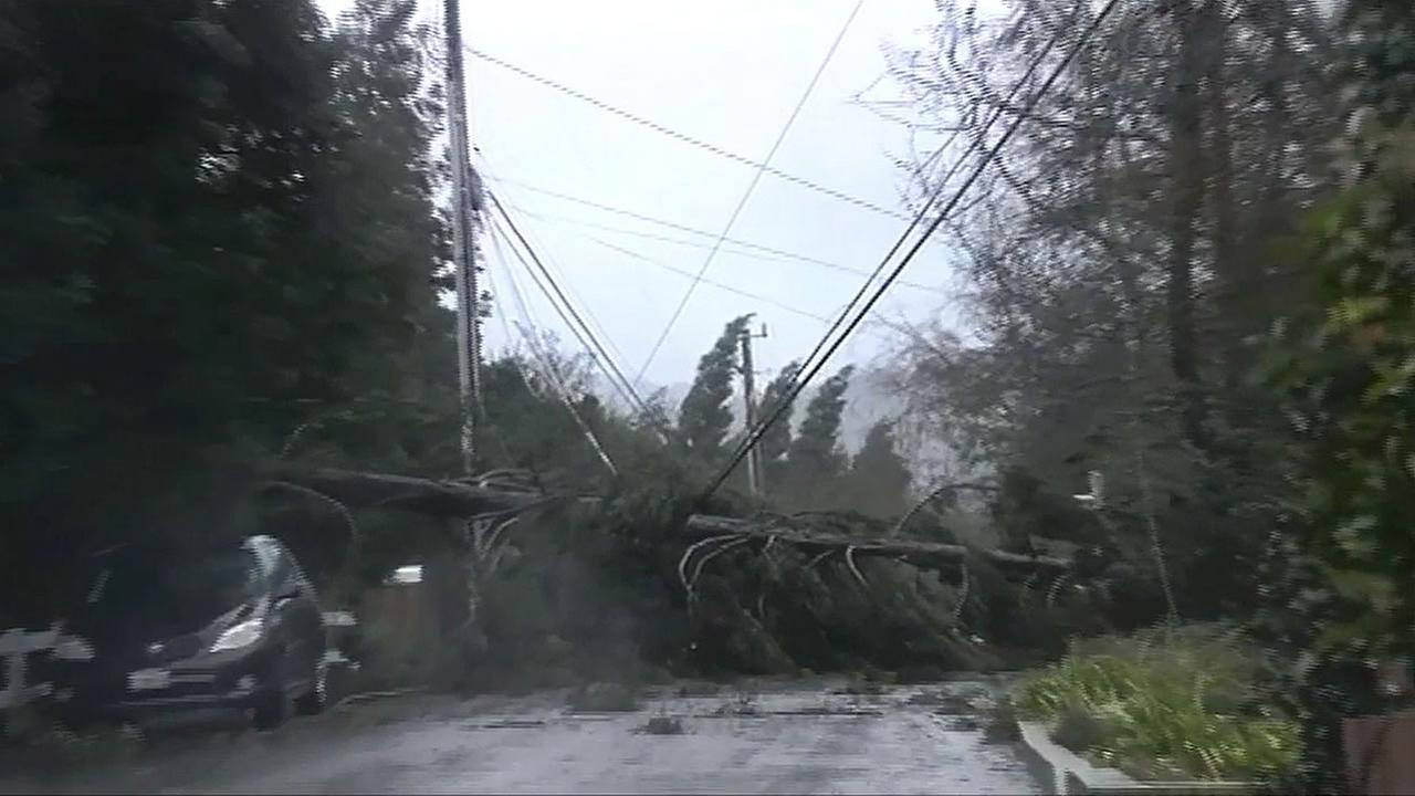 Tree topples over power lines in North Bay