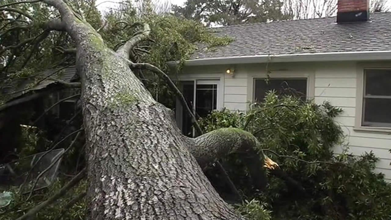 Tree topples over home in Novato