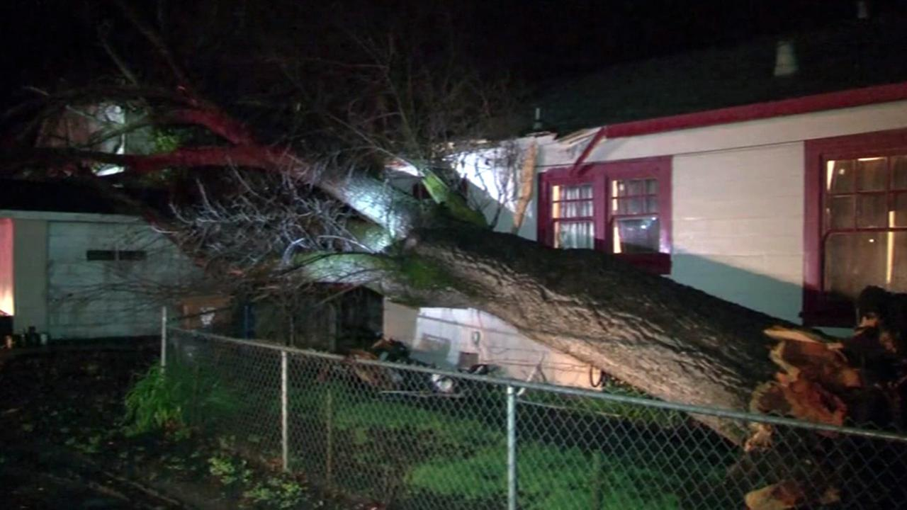 Tree down in Napa.