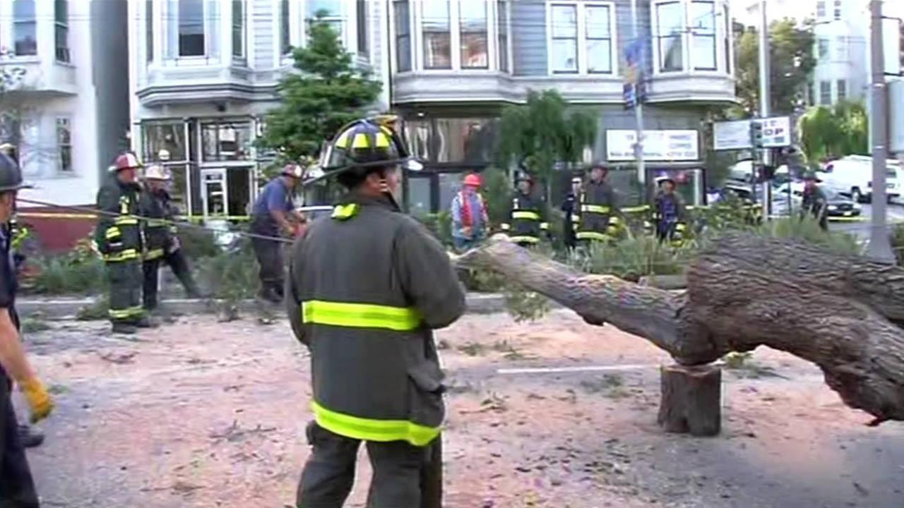Crews work to clear fallen tree in SFs Haight-Ashbury neighborhood