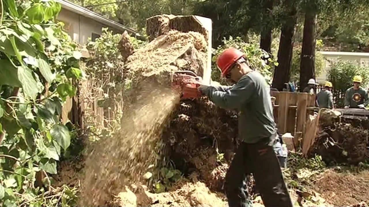 man cutting tree in north bay