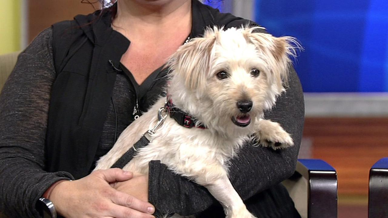 Perfect Pet Maurice available at the San Francisco SPCA (415) 554-3000.