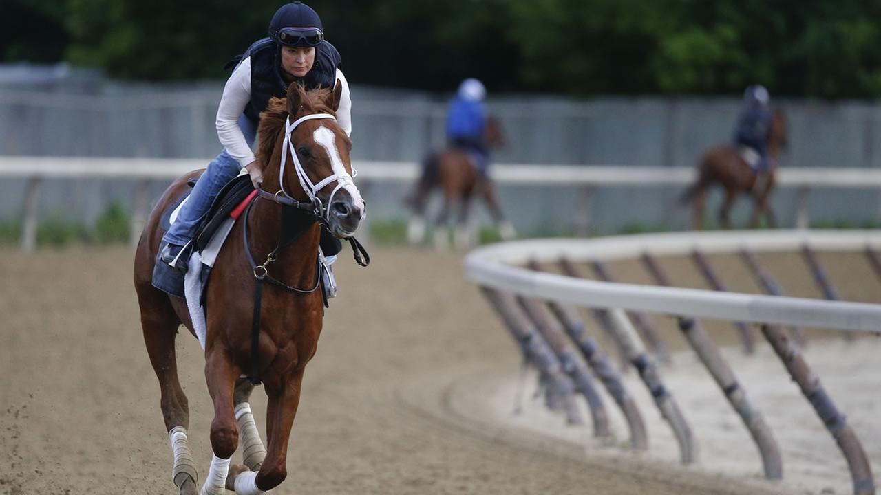 Belmont Stakes entrant Madefromlucky gallops around the training track at Belmont Park, Friday, June 5, 2015, in Elmont, N.Y. (AP Photo/Julie Jacobson)
