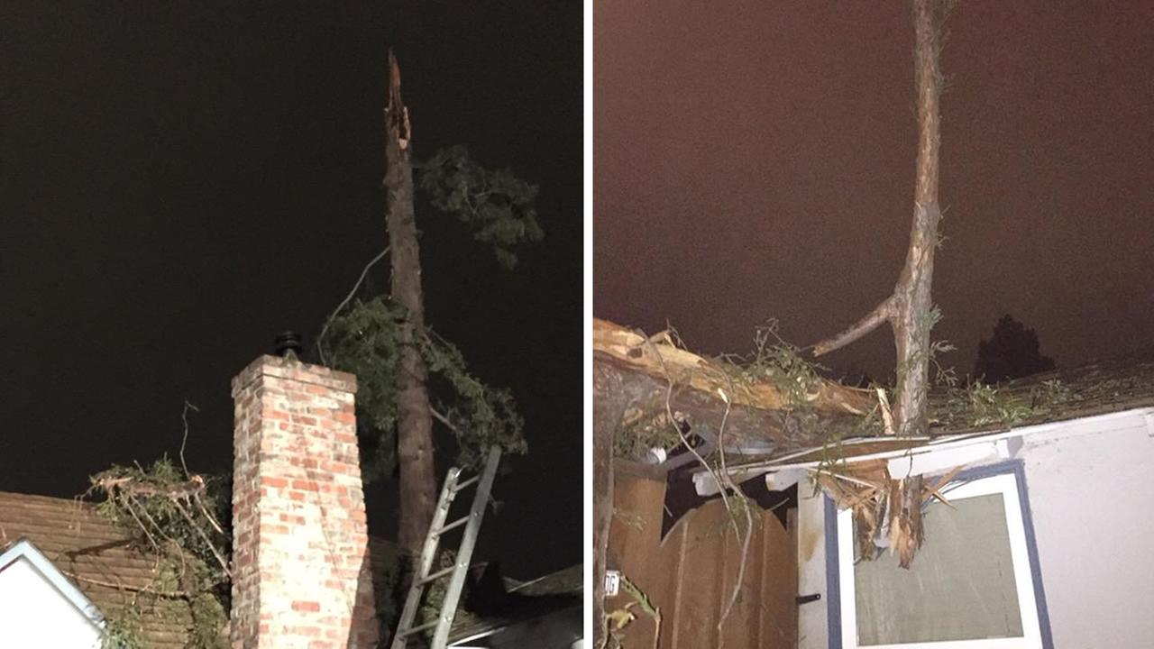 redwood tree damaged by lightning, tree sticks through roof