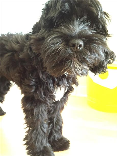 """<div class=""""meta image-caption""""><div class=""""origin-logo origin-image kgo""""><span>KGO</span></div><span class=""""caption-text"""">ABC7 News viewers and staff are sending in photos of their dogs in honor of National Puppy Day on March 23, 2015. (Photo submitted by Ryan Perez/uReport)</span></div>"""