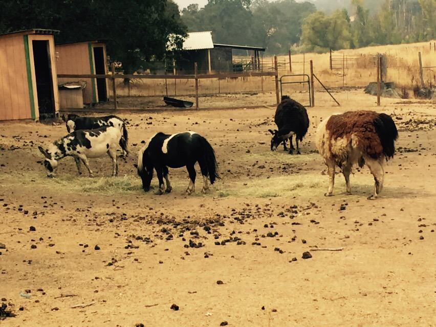 <div class='meta'><div class='origin-logo' data-origin='none'></div><span class='caption-text' data-credit='KGO-TV'>The animals are OK at Herbert Ander's ranch near Hidden Lakes, Calif. on Tuesday, September 15, 2015.</span></div>