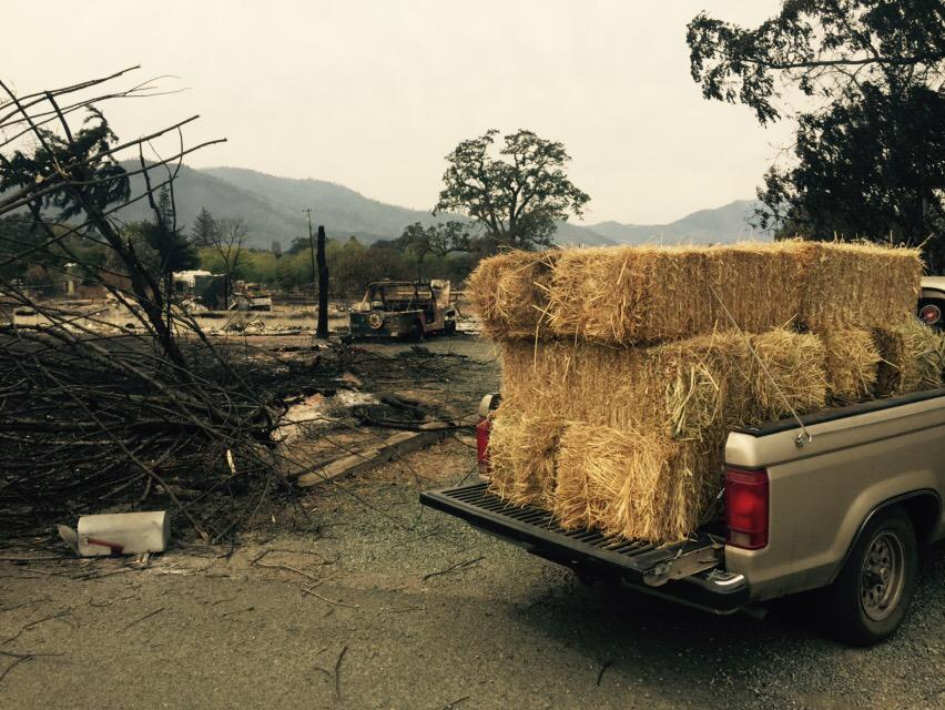 <div class='meta'><div class='origin-logo' data-origin='none'></div><span class='caption-text' data-credit='KGO-TV'>Bales of hay are brought in for horses on Tuesday, September 15, 2015 in Middletown, Calif. after the Valley Fire caused the evacuation of their owners.</span></div>