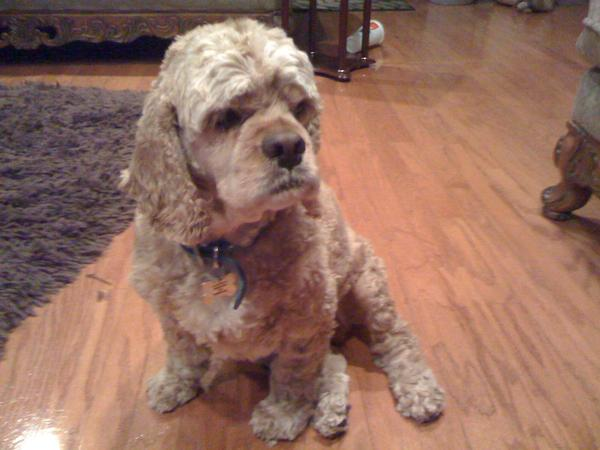 """<div class=""""meta image-caption""""><div class=""""origin-logo origin-image kgo""""><span>KGO</span></div><span class=""""caption-text"""">Meet Brandon! ABC7 News viewers are sending in photos of their dogs in honor of National Puppy Day on March 23, 2015. (Photo submitted by Larry Biel/Twitter)</span></div>"""