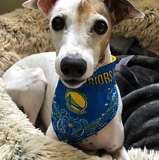<div class='meta'><div class='origin-logo' data-origin='none'></div><span class='caption-text' data-credit='Photo submitted to KGO-TV by @lisamattsonwine/Twitter'>Warriors fans show their spirit during the 2017-2018 season. Share your photos using #DubsOn7 and you may see them online or on TV!</span></div>