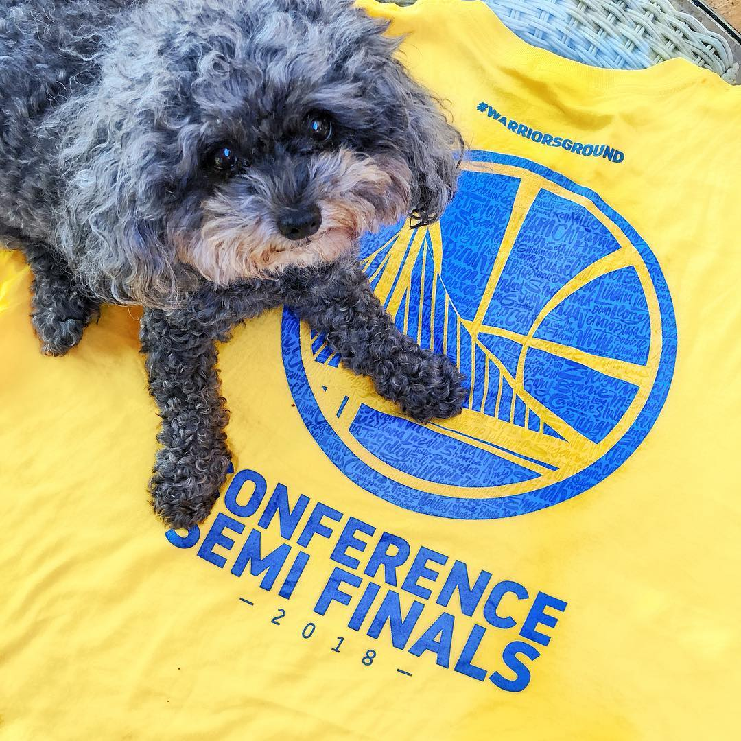 <div class='meta'><div class='origin-logo' data-origin='none'></div><span class='caption-text' data-credit='Photo submitted to KGO-TV by @poodleprincessrory/Instragram'>Warriors fans show their spirit during the 2017-2018 season. Share your photos using #DubsOn7 and you may see them online or on TV!</span></div>