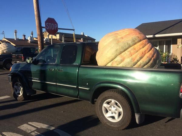 """<div class=""""meta image-caption""""><div class=""""origin-logo origin-image """"><span></span></div><span class=""""caption-text"""">There are pumpkins, and then there are pumpkins! </span></div>"""