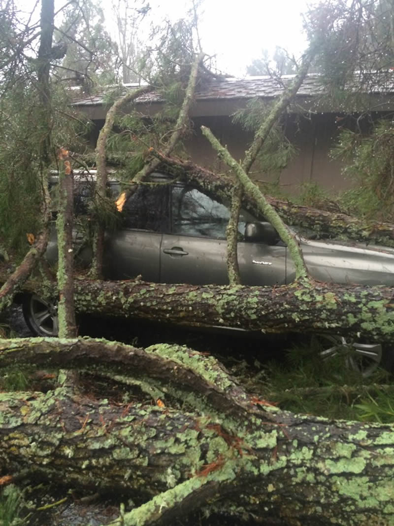 <div class='meta'><div class='origin-logo' data-origin='none'></div><span class='caption-text' data-credit='Photo Courtesy Town of Danville'>A tree crashed down on an SUV in Danville, Calif., on Tuesday, January 19, 2016.</span></div>