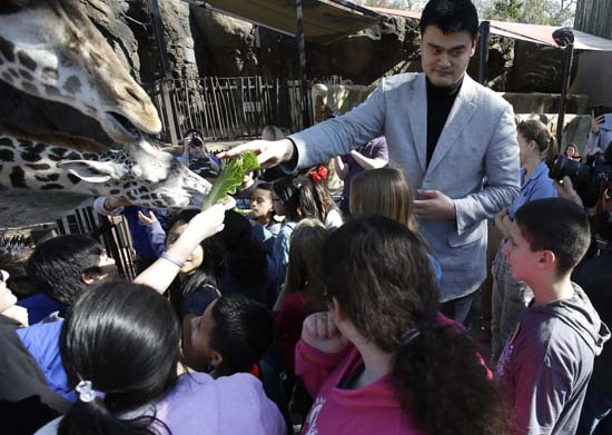 """<div class=""""meta image-caption""""><div class=""""origin-logo origin-image ktrk""""><span>KTRK</span></div><span class=""""caption-text"""">Former Houston Rockets basketball player Yao Ming joins a group of schoolchildren to feed the giraffes at the Houston Zoo on Thursday, Feb. 14, 2013. (AP Photo/Pat Sullivan) (AP)</span></div>"""