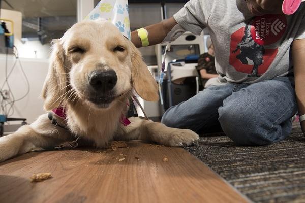<div class='meta'><div class='origin-logo' data-origin='KTRK'></div><span class='caption-text' data-credit='Paul Vincent Kuntz/Texas Children's Hospital'>Texas Children's Hospital's therapy dog Elsa celebrated her 2nd birthday with patients and friends alike.</span></div>
