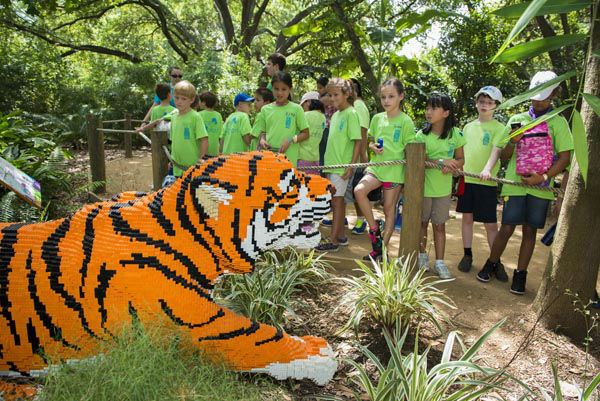Registration is now available for Houston Zoo's Camp Zoofari school break camps. Reserve your spot quickly as camp sells out fast! This year, we will be offering school break camps for campers.