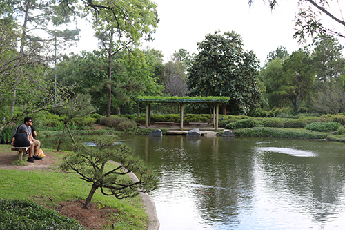 <div class='meta'><div class='origin-logo' data-origin='KTRK'></div><span class='caption-text' data-credit='Danny Clemens'>The Japanese Gardens is home to a variety of flora and fauna from the far east.</span></div>