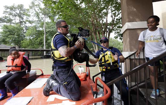 <div class='meta'><div class='origin-logo' data-origin='AP'></div><span class='caption-text' data-credit='AP Photo/David J. Phillip'>Firefighter Matt Hughes helps rescue Meagen McDonald's dog</span></div>