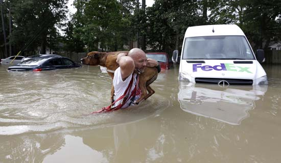 <div class='meta'><div class='origin-logo' data-origin='AP'></div><span class='caption-text' data-credit='AP Photo/David J. Phillip'>Louis Marquez carries his dog Dallas through floodwaters after rescuing the dog from his flooded apartment</span></div>