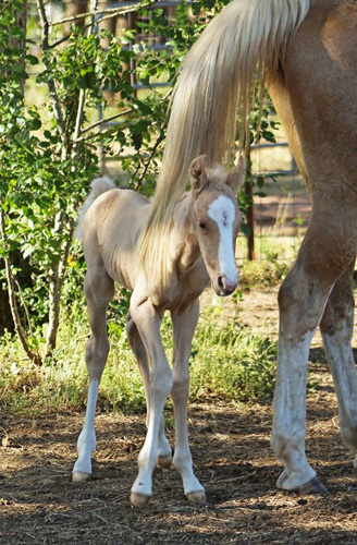 <div class='meta'><div class='origin-logo' data-origin='KTRK'></div><span class='caption-text' data-credit='Jenny Tucker'>Meet Bonnie and Clyde, two twin foals who are defying the odds.</span></div>
