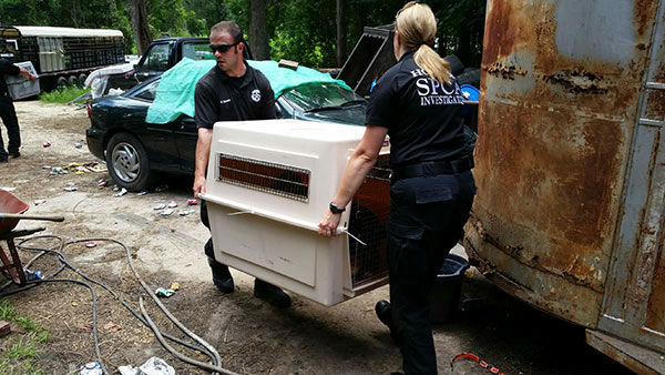 "<div class=""meta image-caption""><div class=""origin-logo origin-image ""><span></span></div><span class=""caption-text"">The Houston SPCA is now caring for 14 animals rescued from a home in Liberty County (KTRK Photo/ Houston SPCA)</span></div>"