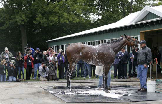 "<div class=""meta image-caption""><div class=""origin-logo origin-image none""><span>none</span></div><span class=""caption-text"">Kentucky Derby and Preakness Stakes winner American Pharoah gets a bath  (AP Photo/ Julie Jacobson)</span></div>"