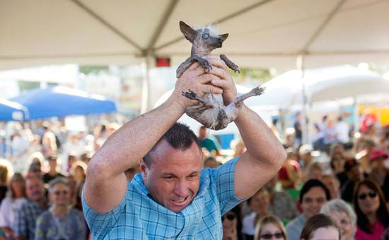 <div class='meta'><div class='origin-logo' data-origin='none'></div><span class='caption-text' data-credit='AP Photo/ Noah Berger'>Jason Wurtz campaigns Sweepee Rambo, a 16-year-old Chinese Crested, in the World's Ugliest Dog Contest</span></div>