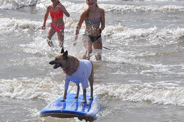 <div class='meta'><div class='origin-logo' data-origin='none'></div><span class='caption-text' data-credit=''>These canines were cooler than cool at the 2016 Surf Dog Competition in Galveston, Texas, on Sunday, July 17, 2016!</span></div>
