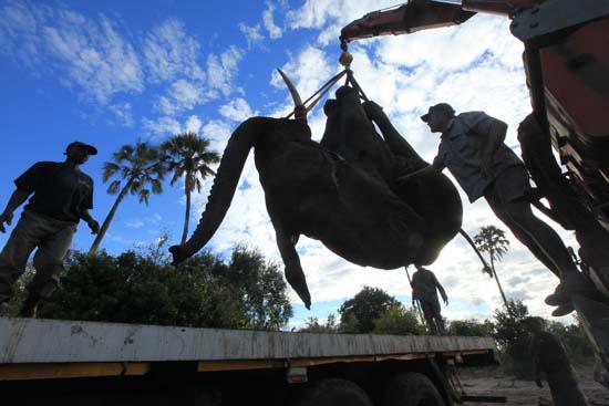 "<div class=""meta image-caption""><div class=""origin-logo origin-image ap""><span>AP</span></div><span class=""caption-text"">An elephant is lifted by a crane in an upside down position in Lilongwe, Malawi (AP Photo/Tsvangirayi Mukwazhi)</span></div>"