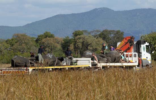 "<div class=""meta image-caption""><div class=""origin-logo origin-image ap""><span>AP</span></div><span class=""caption-text"">A truck transports immobilized elephants in Lilongwe, Malawi (AP Photo/Tsvangirayi Mukwazhi)</span></div>"