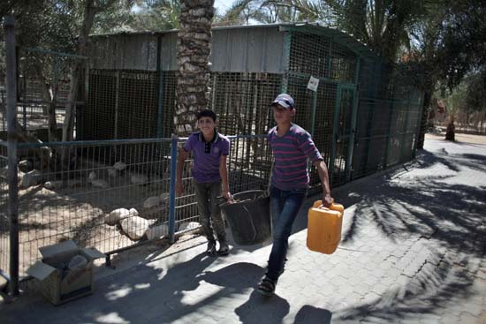 """<div class=""""meta image-caption""""><div class=""""origin-logo origin-image ap""""><span>AP</span></div><span class=""""caption-text"""">Two Palestinian workers clean the zoo in Khan Younis, southern Gaza Strip (AP Photo/ Khalil Hamra)</span></div>"""