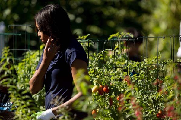 "<div class=""meta image-caption""><div class=""origin-logo origin-image ap""><span>AP</span></div><span class=""caption-text"">First lady Michelle Obama harvest the White House kitchen garden (AP Photo/Andrew Harnik)</span></div>"
