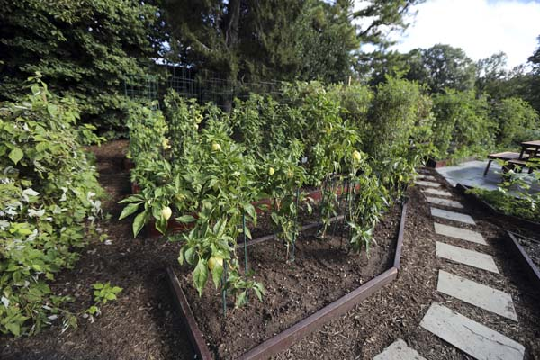 "<div class=""meta image-caption""><div class=""origin-logo origin-image ap""><span>AP</span></div><span class=""caption-text"">A walkway lined with pavers and layered with mulch is featured in one of the new improvement to the White House Kitchen Garden (AP Photo/Manuel Balce Ceneta)</span></div>"
