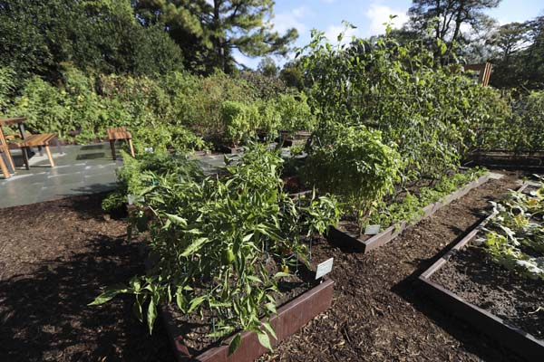"<div class=""meta image-caption""><div class=""origin-logo origin-image ap""><span>AP</span></div><span class=""caption-text"">Green bell pepper and other vegetables are grown at the White House Kitchen Garden (AP Photo/Manuel Balce Ceneta)</span></div>"