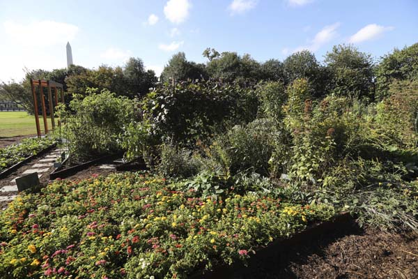 "<div class=""meta image-caption""><div class=""origin-logo origin-image ap""><span>AP</span></div><span class=""caption-text"">A flower bed is mixed with vegetables to attract more bees to cross pollinate plants at the White House Kitchen Garden (AP Photo/Manuel Balce Ceneta)</span></div>"