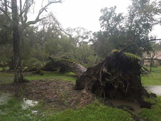 <div class='meta'><div class='origin-logo' data-origin='none'></div><span class='caption-text' data-credit='ABC-13 viewer-submitted photo'>A downed tree seen in the Houston area</span></div>